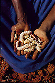 Man Eating Bugs: Australia & Western Samoa