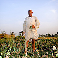 An Egyptian farmer stands in his field holding a hoe in one hand and some of the onion bulbs which he has just harvested in the other. Luxor, Egypt.