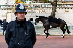 © Licensed to London News Pictures. 03/03/2015. LONDON, UK. A horse breaks loose of its rider during a procession of Royal Cavalry on the Mall during Mexican President's state visit in central London on Tuesday, 3 March 2015. Photo credit : Tolga Akmen/LNP