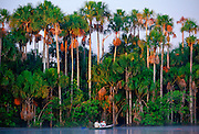 Tourists in a boat on Lake Sandoval, Peruvian Rainforest, South America in the early morning.