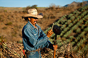 A jimador sharpens his coa, which he will use to harvest the heart, or pina, of the blue agaves used to make tequila.