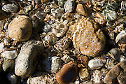 River rocks in the shallows of the Lochsa River, Idaho. . PLEASE CONTACT US FOR DIGITAL DOWNLOAD AND PRICING.