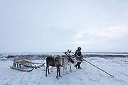 Lyonya, a Nenets Reindeer Herder, pauses and looks over the taiga for his reindeer herd.