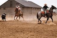 Will James Roundup, Ranch Rodeo, Three Man Cow Doctoring, Hardin, Montana, Reata Brannaman, Cody Hill