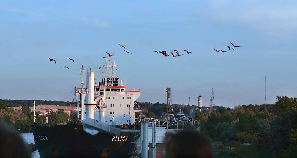 St. Lawrence, nws, lynn, 2.-Canadian Geese fly over lock number 3 of the Welland Canal outside of St. Catherine's Ontario as the tanker ship Pilica was headed downbound toward Lake Ontario Friday August 5, 2005.