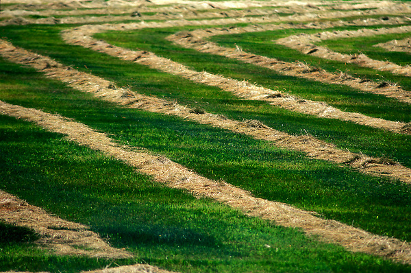 Stock photo of a recently mowed field of grass