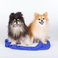 2017_04_10 - Diane Fennel Dog Portraits