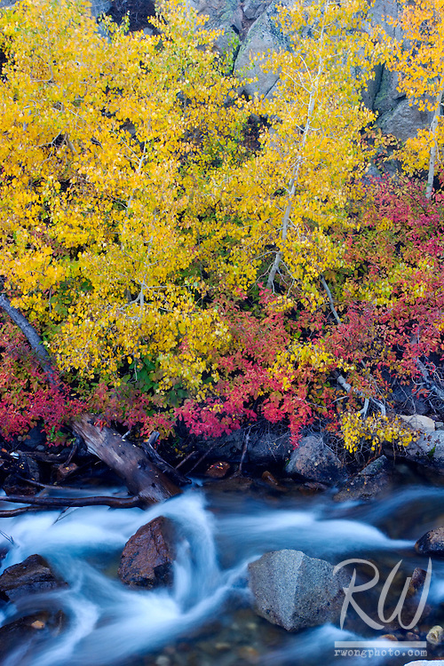 Fall Color Along Middle Fork Bishop Creek, Eastern Sierra, California