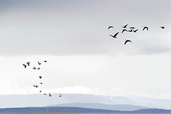 birds flying in New Mexico