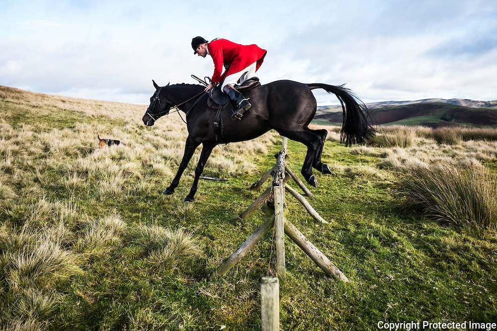 Johnny Riley, huntsman of the Jedforest Hunt, jumps a fence in the Border hills.