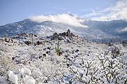 Snow blankets the Santa Catalina Mountains, Sonoran Desert, Catalina, Arizona, USA. (PHOTO: Norma Jean Gargasz)