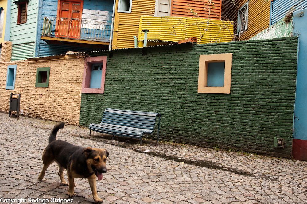 A dog goes through Caminito street, in La Boca neighborhood of Buenos Aires, Argentina.<br /> Caminito is a pedestrian street created in the late 1950s by local painter Benito Quinquela Mart&iacute;n and other artist friends to recreate a version of the old immigrant neighborhood of La Boca, using wood and corrugated zinc painted in bright colors. Today, Caminito and the surrounding areas feature cafes, souvenir shops, tango dancers and other street performances aimed to attract tourists.