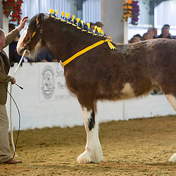 W A & M G King's Hillmoor Eden<br />