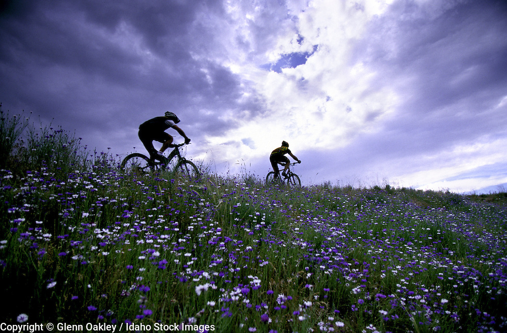 Mountain bikers w/ flowers and storm clouds. MR