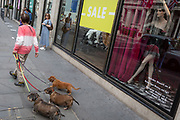 On the day that covid pandemic guidelines for shoppers in England mean that the wearing of face coverings in shops becomes mandatory, a lady walking three dachshunds passes Harvey Nichols in Knightsbridge, on 24th July 2020, in London, England.