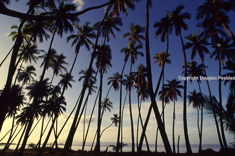 Coconut Grove, Molokai, Hawaii<br />