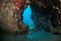 Silversides congregate in reef cavern..Shot in British Virgin Islands