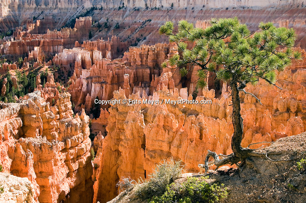 Utah, USA, October 2009. Bryce Canyon National Park is distinctive due to its geological structures, called hoodoos, formed from wind, water, and ice erosion of the river and lakebed sedimentary rocks. A walk along the rim offers photo opportunities and the red, orange and white colors of the rocks provide spectacular views. A roadtrip through the Western United States leads us through many impressive national parks. Photo by Frits Meyst/Adventure4ever.com