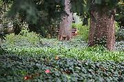 Mannheim. 05.04.16 Luisenpark. Verlegung von Glasfaserkabel.<br /> Mit dem Spülbohrverfahren werden die Kabel zwei Meter tief unter der Oberfläche verlegt. Der Park nutzt die Glasfaser zur internen Datenübermittlung. <br /> <br /> Bild: Markus Prosswitz 05APR16 / masterpress (Bild ist honorarpflichtig - No Model Release!)
