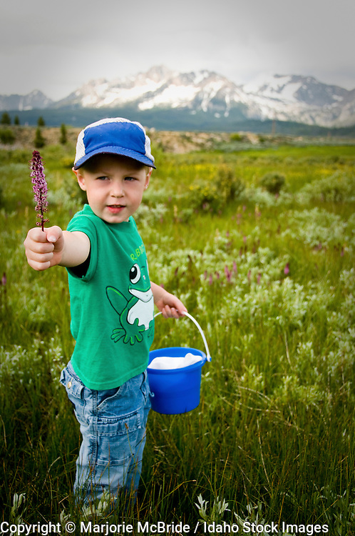 Little boy playing in a meadow, picking flowers during spring with the Sawtooth mountains beyond in Stanley, Idaho.