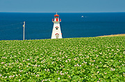 Cape Tryon Lighthouse, potatoes and Gulf of St. Lawrence<br /> Cape Tryon<br />Prince Edward Island<br />Canada