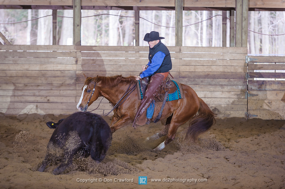 April 30 2017 - Minshall Farm Cutting 2, held at Minshall Farms, Hillsburgh Ontario. The event was put on by the Ontario Cutting Horse Association. Riding in the 35,000 Non-Pro Class is David Hamilton on Cat Powered owned by the rider.