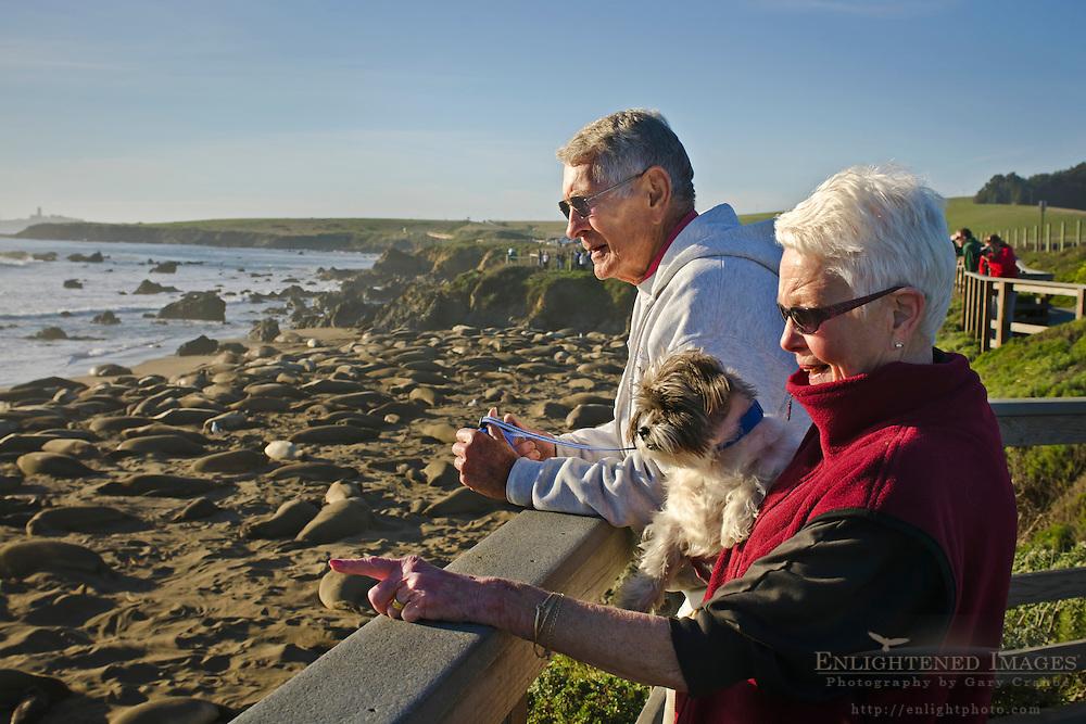 Tourists looking at the Northern Elephant Seals (Mirounga angustirostris) at Piedras Blancas, near San Simeon, San Luis Obispo County, California