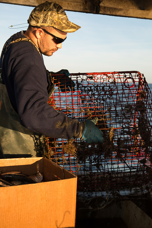 Ryan Ribb empties a crab trap into a bin on the Island Lady   October 11, 2015