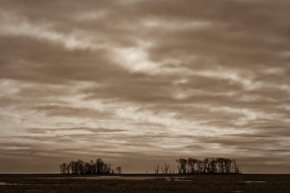 Tree islands on the winter saltmarsh under overcast January skies, Bombay Hook National Wildlife Refuge, Smyrna, Delaware