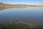 Israel, Hula Valley, Agmon lake winter, March