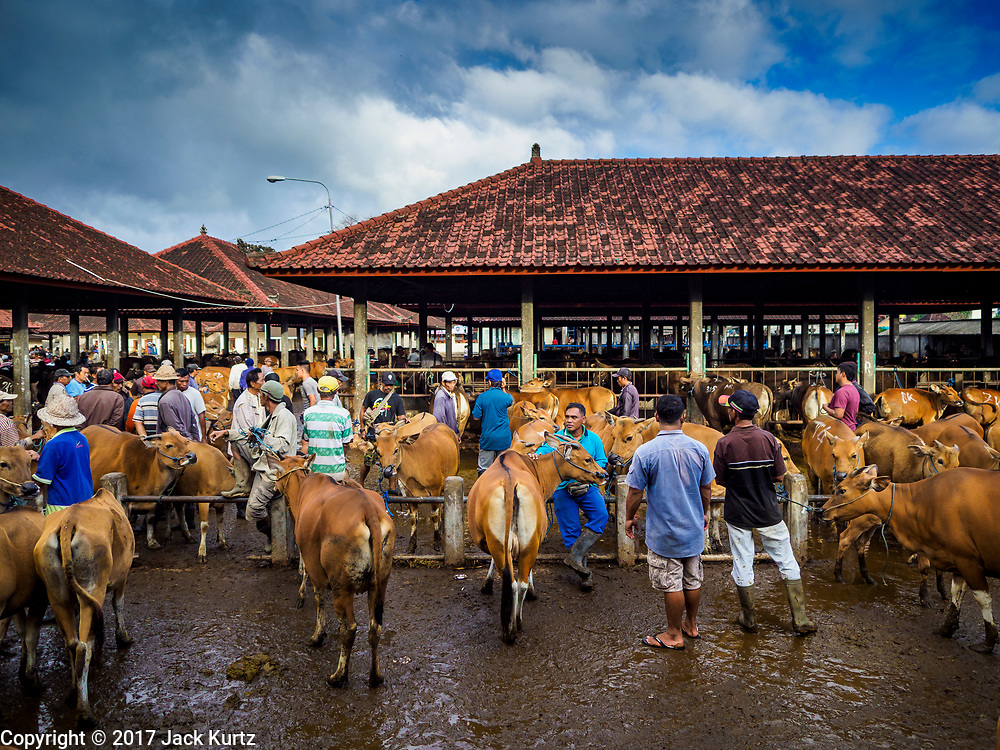 06 AUGUST 2017 - MENGWI, BALI, INDONESIA: The livestock sheds in the Bringkit Market in Mengwi, about 30 minutes from Denpasar. Bringkit Market is famous on Bali for its Sunday livestock and poultry market. Hundreds of the small Bali cows are bought and sold there every week. Bali's local markets are open on an every three day rotating schedule because venders travel from town to town. Before modern refrigeration and convenience stores became common place on Bali, markets were thriving community gatherings. Fewer people shop at markets now as more and more consumers go to convenience stores and more families have refrigerators.     PHOTO BY JACK KURTZ