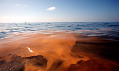 BP Oil Spill - Environment