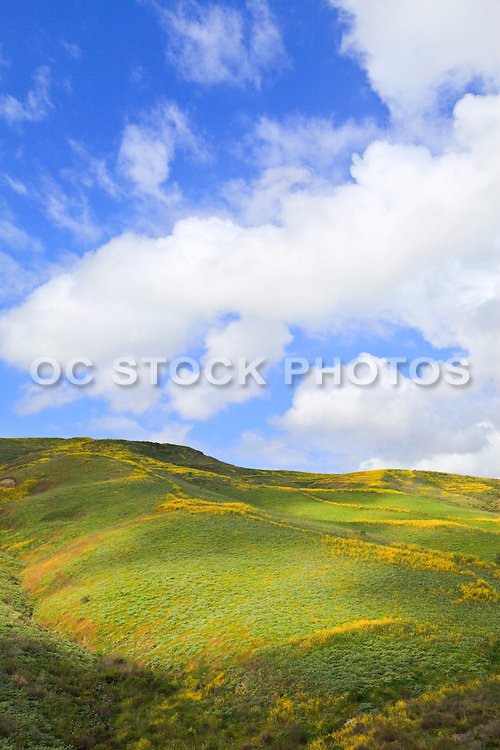 Rolling Hills San Clemente