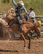 Saddle Bronc Rider Kick LaDuke from Knightsen, California scores 77.0 at the 62nd annual Mother Lode Round-up on Sunday, May 12, 2019 in Sonora, California.  Photo by Al Golub