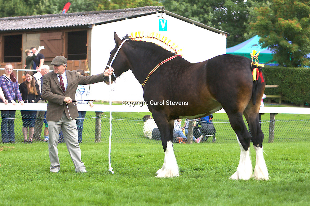 J C G Bloom's Bay Filly<br />