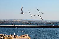 Gabbiani sorvolano un peschereccio e virano verso il mare.