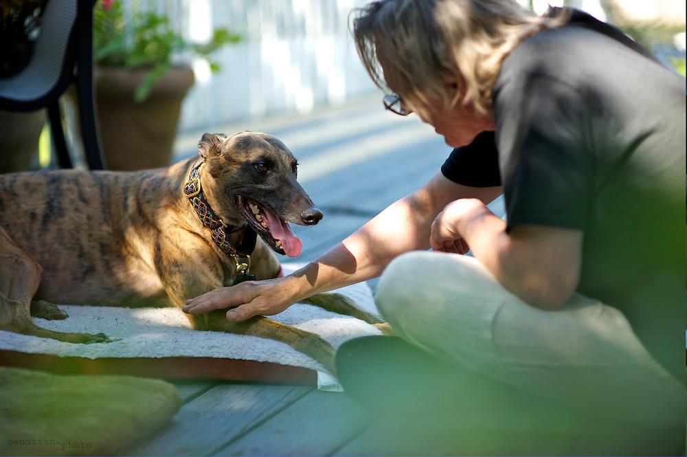 Lost greyhound Leon's Rescue BBQ