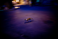 cuban stray cat running through streets