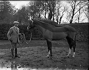 Horse at Col. Joseph Hume-Dudgeon's Stables, Merville House.<br />