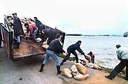 Nederland, Ooij, 01-02-1995Eind januari, begin februari 1995 steeg het water van de Rijn, Maas en Waal tot historische record hoogte van 16,64 m. bij Lobith. Een evacuatie van 250.000 mensen was noodzakelijk vanwege het gevaar voor dijkdoorbraak en overstroming. op verschillende zwakke punten werd geprobeerd de dijken te versterken met zandzakken. Hier in de Ooijpolder bij Nijmegen.Late January, early February 1995 increased the water of the Rhine, Maas and Waal to a record high of 16.64 meters at Lobith. An evacuation of 250,000 people was needed because of flood risk. At several points people tried to reinforce the dikes with sandbags. Here in the Ooijpolder in Nijmegen.Foto: Flip Franssen/Hollandse Hoogte