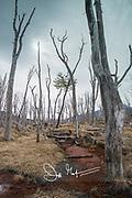 Alberto de Agostini National Park in Chile.