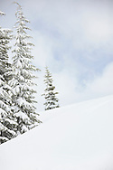 A white, winter, snowy slope with pine trees and faint blue sky.