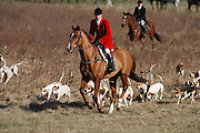 Ivan Dowling and hounds head to a covert. (Photograph by Jim Graham)