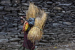 A women carrying straw through Gatlang. Nepal, May 03, 2013