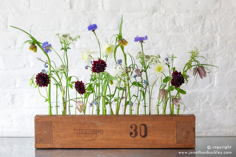 Arrangement of flowers in an old cigar press. Includes scabious, cornflowers, aquilegia, snakeshead fritillaries and astrantia