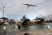 Seagulls fly in the harbor in Essaouira, Morocco.