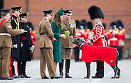 The Duchess of  Cambridge gives a shamrock to Domhnall, the Irish Wolfhound mascot of the Irish Guards during the regiment's annual St Patrick's Day Parade at Mons Barracks, Aldershot, Hampshire. The Duke of Cambridge looks on (left).<br /> Picture date Monday 17th March, 2014.<br /> Picture by Christopher Ison. Contact +447544 044177 chrisison@mac.com