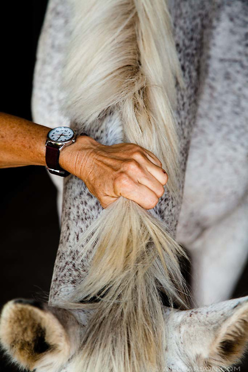 Louisa Woodville of University Park, Md., lovingly grabs the mane of Empress, a nine-year-old Irish sporthorse, near the boarding stalls at Waredaca Horse Pasture in Montgomery County, Md., on Sept. 2, 2014. Waredaca owners Robert Butts and his wife Gretchen serve as environmental stewards and have implemented best management practices such as fenced streams on the 220-acre pasture. (Photo by Will Parson/Chesapeake Bay Program)