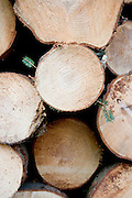stacked cut logs with a fresh green sprouting twig