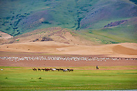 Mongolie, province de Zavkhan, lac Noir, troupeau de mouton et de chevaux // Mongolia, Zavkhan province, Khar Nuur lake, sheep and horse herd